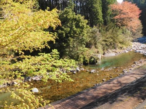 Momijiwakaba202147kawa1