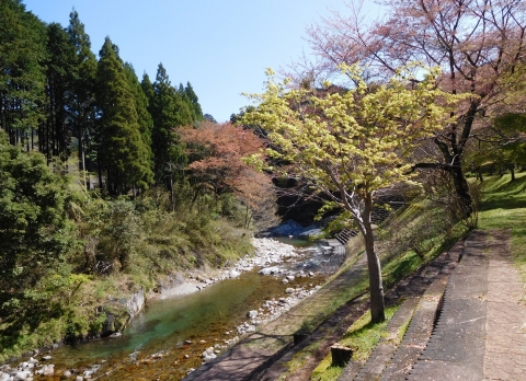 Momijiwakaba202147kawa2