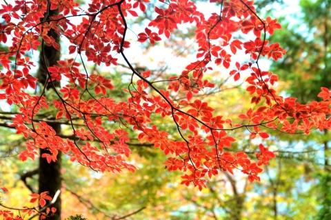 Ohno20201021daifugena3