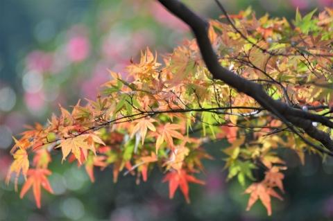 Ohno20201121kuchib10