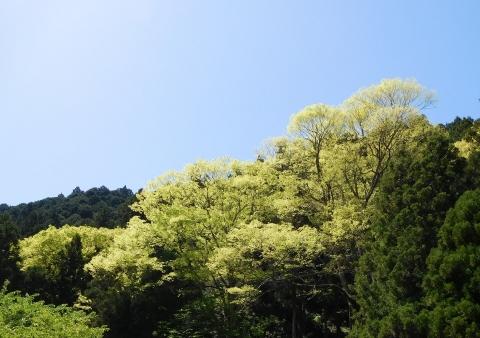 Ookeyaki202057wakabaup