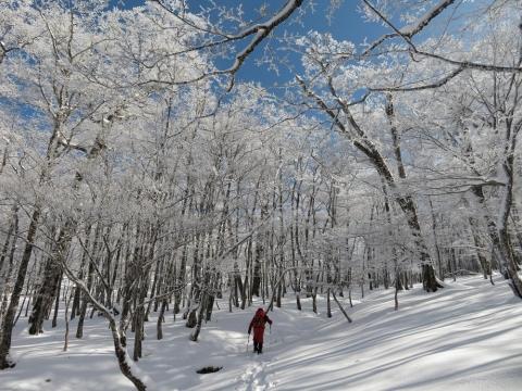Pic2020119myojinr11