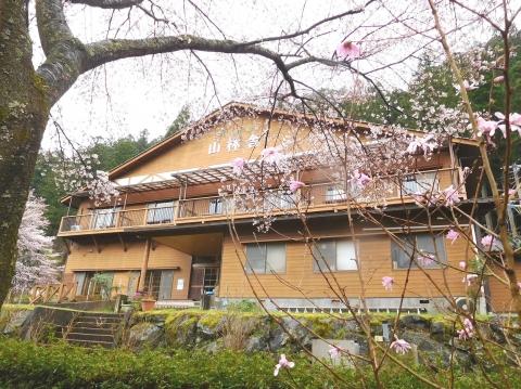 Sakura2020330honkan2