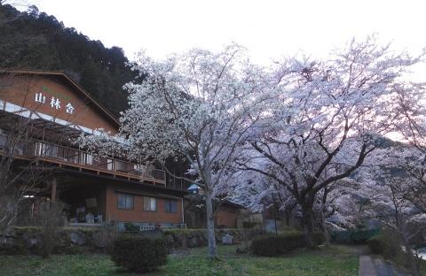 Sakura202042honyugure