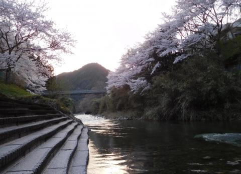 Sakura202042kawayu