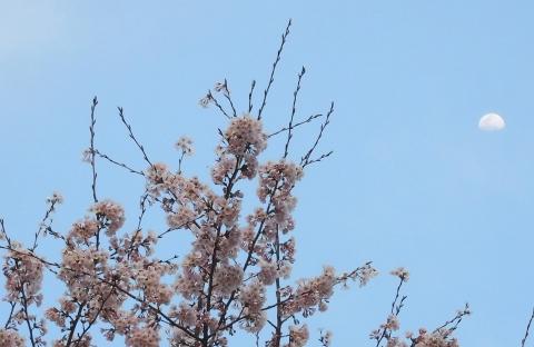 Sakura202043tukiyu