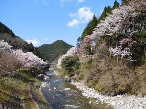 Sakura202045kawasiroyama