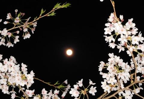 Sakura202047supermoon