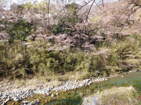 Sakura2021319taigan