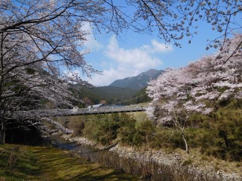 Sakura2021326hasitakao