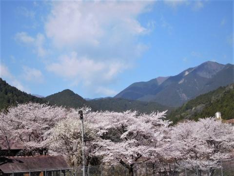 Sakura2021326takamitakao