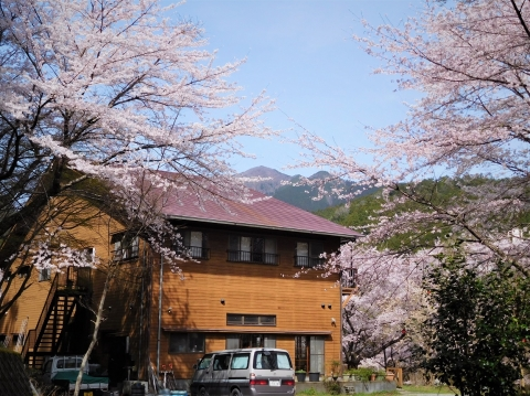 Sakura2021329honkane