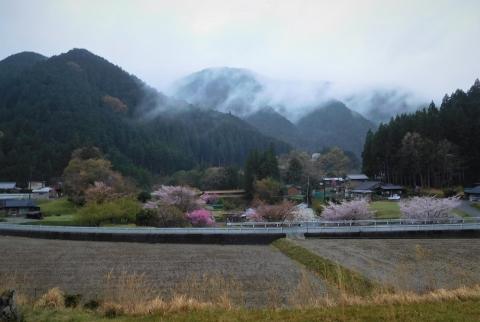 Sakuramomo202143noguchi