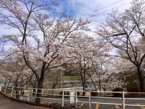 Takem2020329chudaisakura