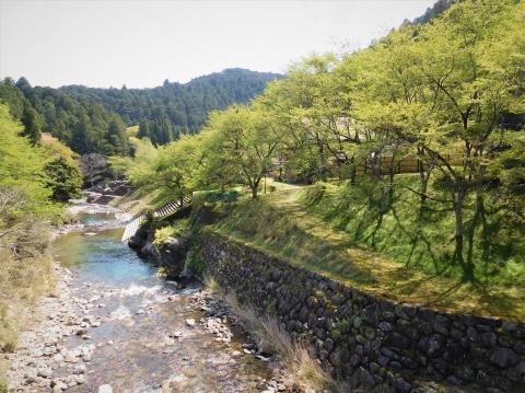 Wakaba2021421hasiyori1