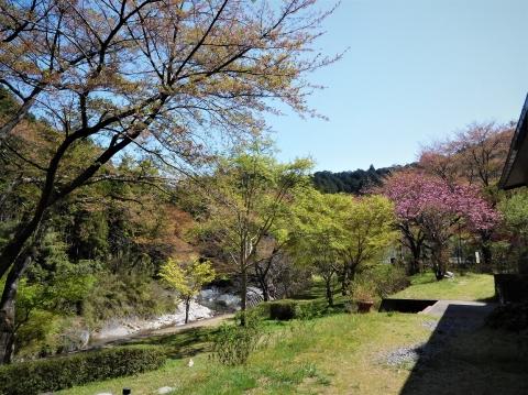 Wakababotanzakura2021410