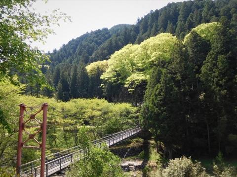 Wakabaokeyaki2021421hasi