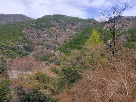 Watanabesakumasakura1