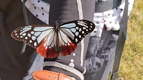 Yamasita20201012cho