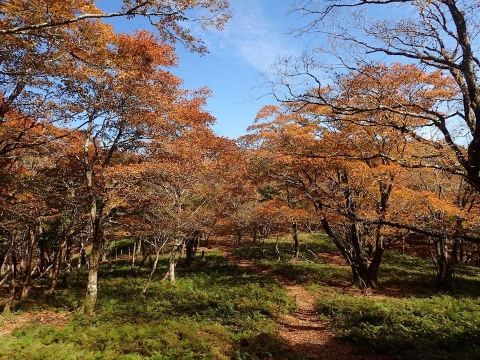 Yuzu20201020myohino2